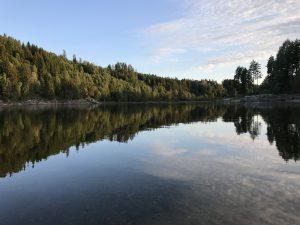 Vann og skog. Foto.